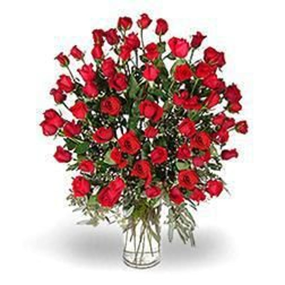 60 red roses beautiful hand picked ecuadorian red roses albany available for nationwide delivery izmirmasajfo