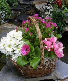 Assorted Blooming Spring Planter