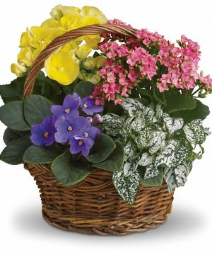 Pretty Blooming Basket