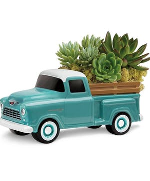 Chevy Pickup Succulent