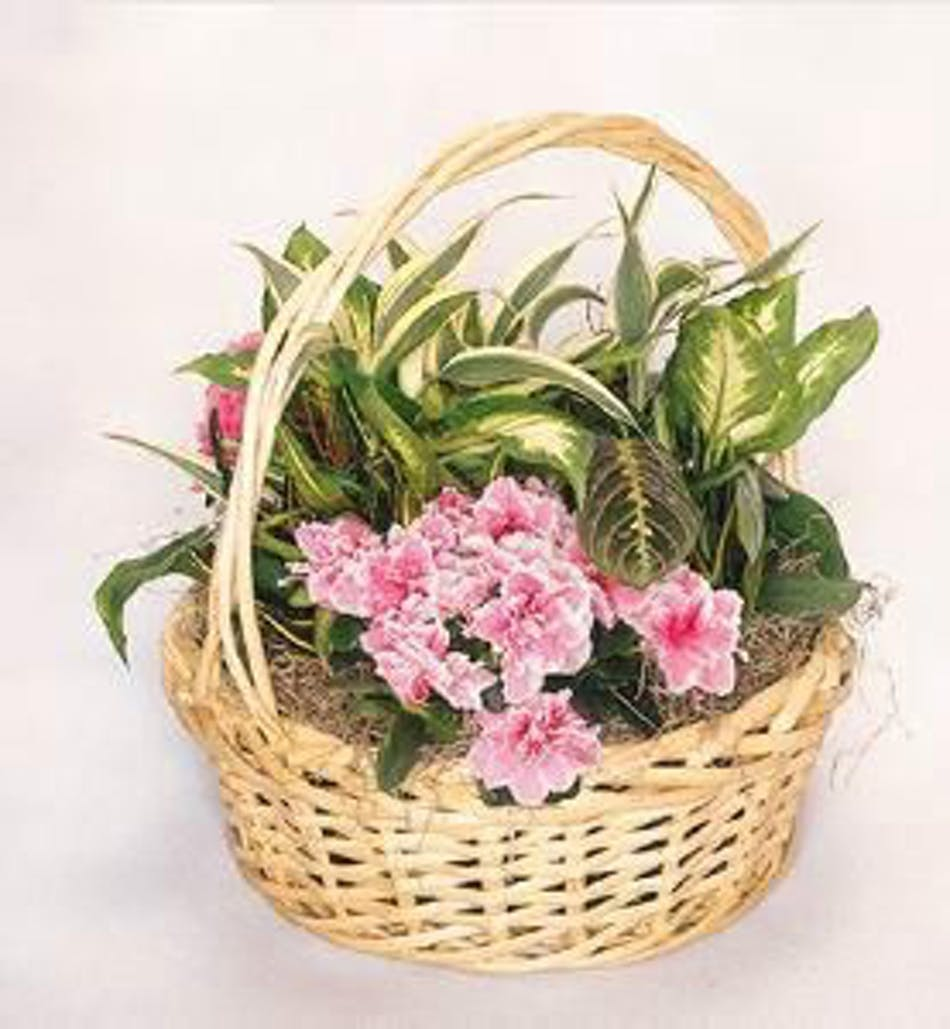 Dish garden with a blooming plant albany florists flowers albany available for nationwide delivery izmirmasajfo