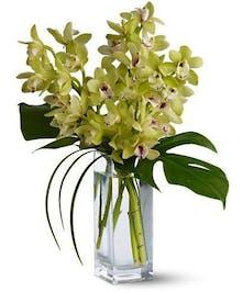 Cymbidium Orchids in Glass Vase