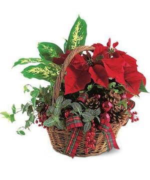 Basket of Winter Plants