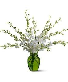 White Dendrobium Orchids