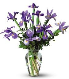 Stunning Designed Iris