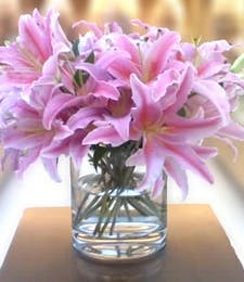 """""""Simply Lilies"""""""